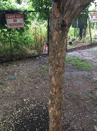 hawthorn bark.jpeg