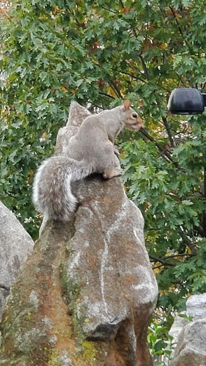 squirrel on plinth.jpg