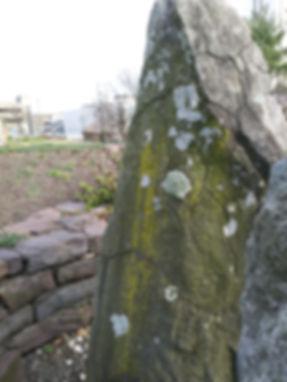 lichen on plinth march.jpg