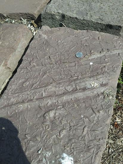 fossils park 3.jpg