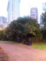 tbd tree se.jpg