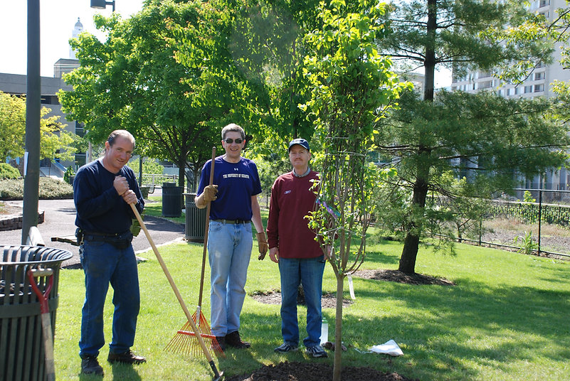 replanting may 17 2008.JPG