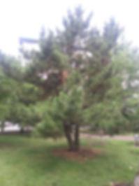 black pine phone.jpg