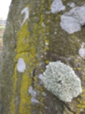 lichen on plinth march closeup.jpg