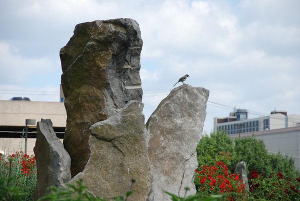 mockingbird in park.JPG