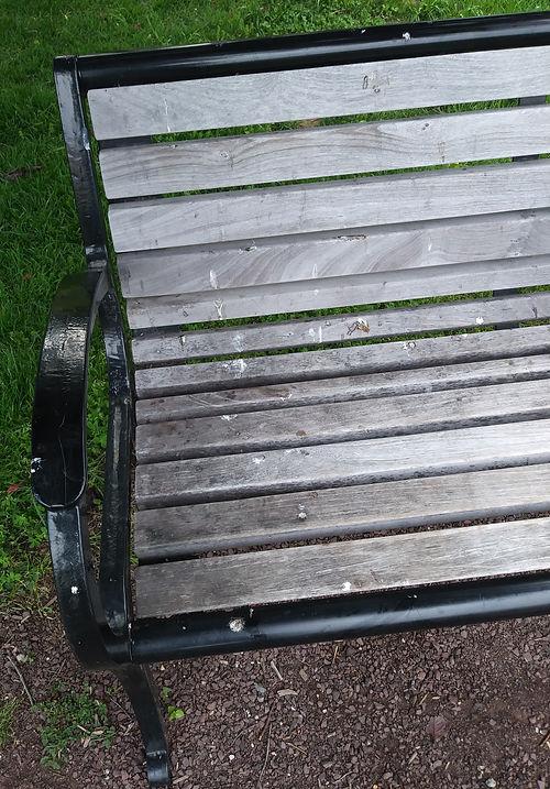 bench cleaned of poop (2).jpg
