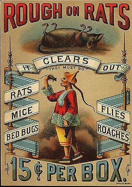 carey rough on rats.jpeg