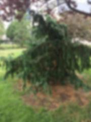 cypress.jpeg
