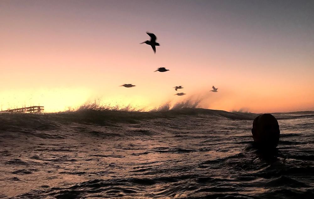 John Shearer and Six Brown Pelicans, Playa Zicatela.