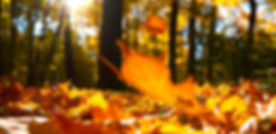 Autumn-Leaves-Falling-On-Ground.jpg