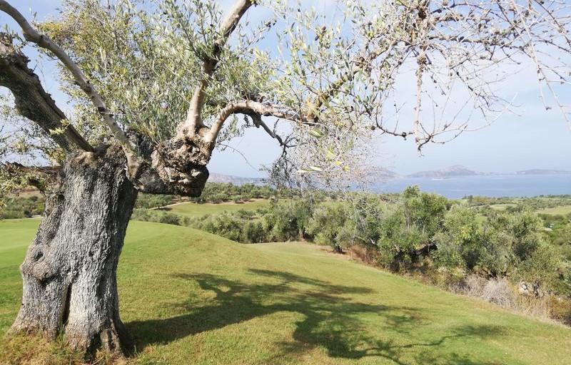 Hoffman Ospina Resort Landscape Architecture