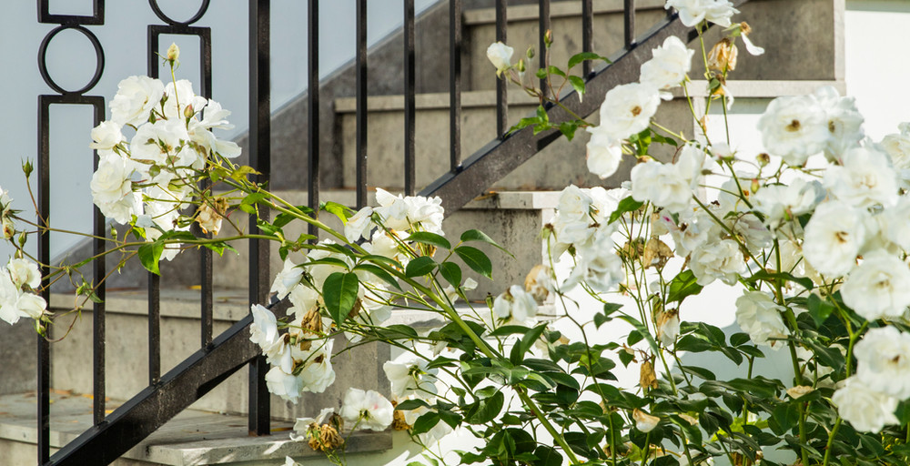 Hoffman Ospina Landscape Design Classical Details