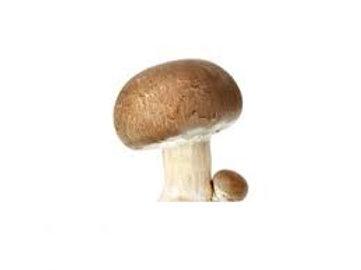 Champignons brun - France - 500g