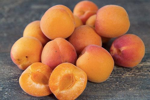 Abricots Bio - France - 500g