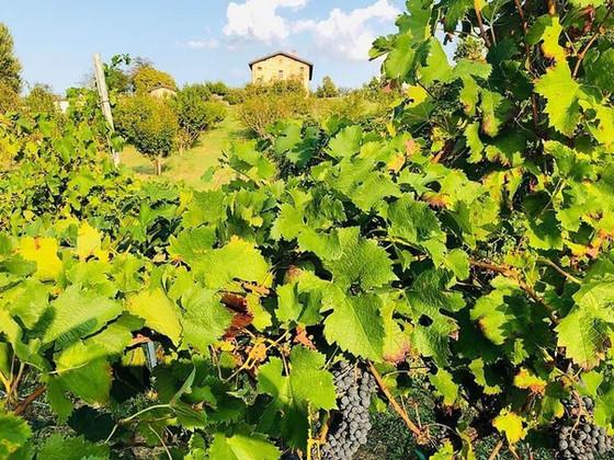 Organic Wine Estate