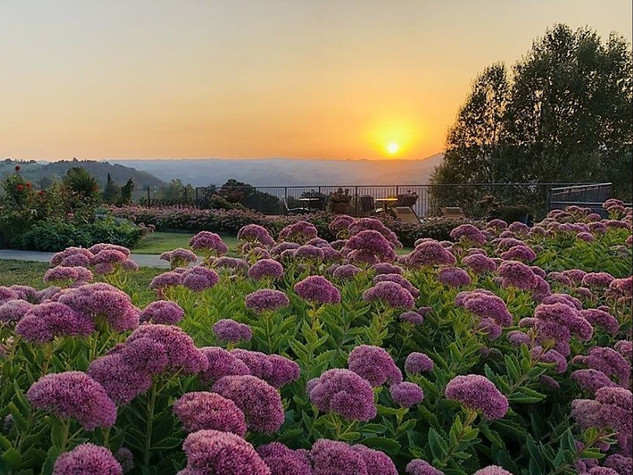 Sunset With Flowers