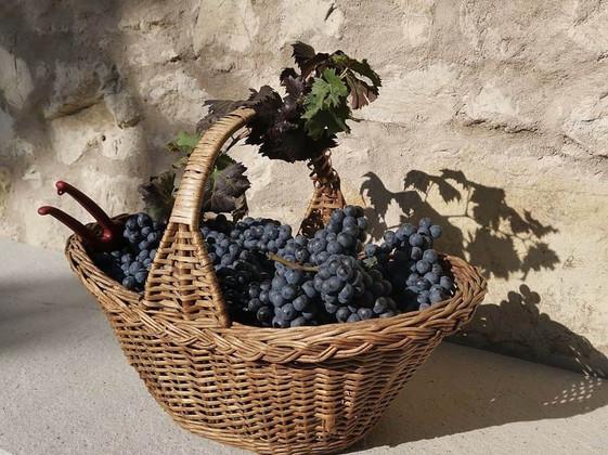 Organic Festasio Harvest