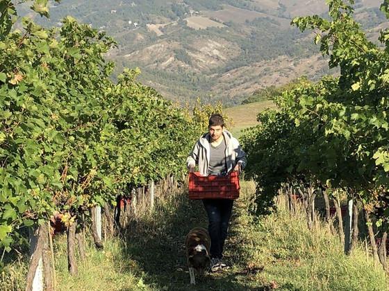 Handpicked Organic Grapes