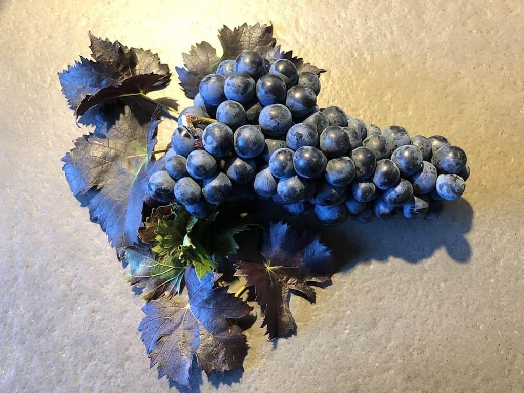 Artistic Festasio Grape