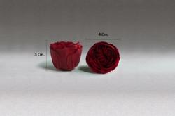 Kabuky Garden Rose