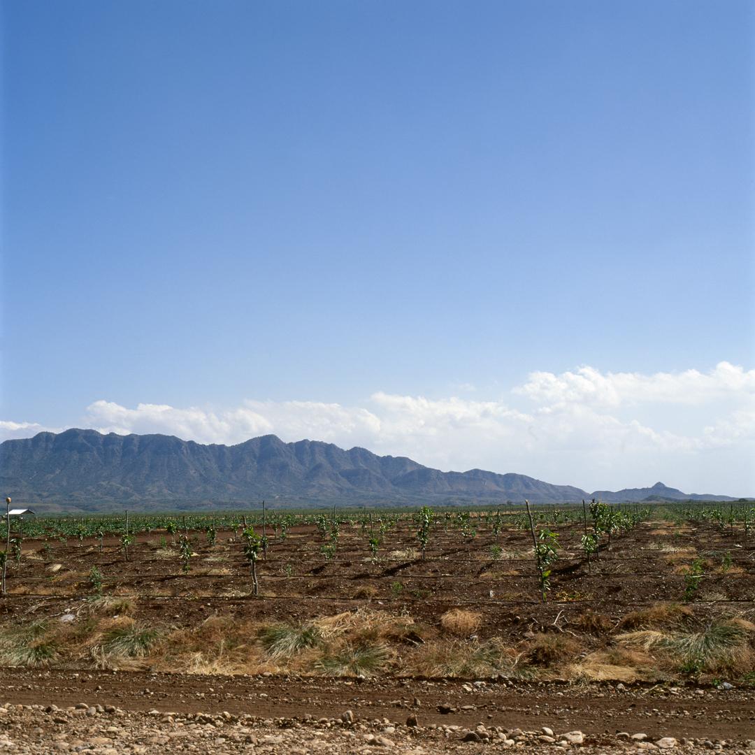 Plantaciones Palpitantes