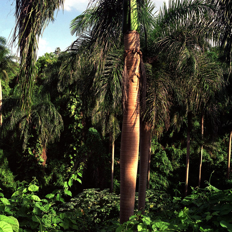 Palma Mía