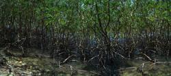 Espejo de manglares
