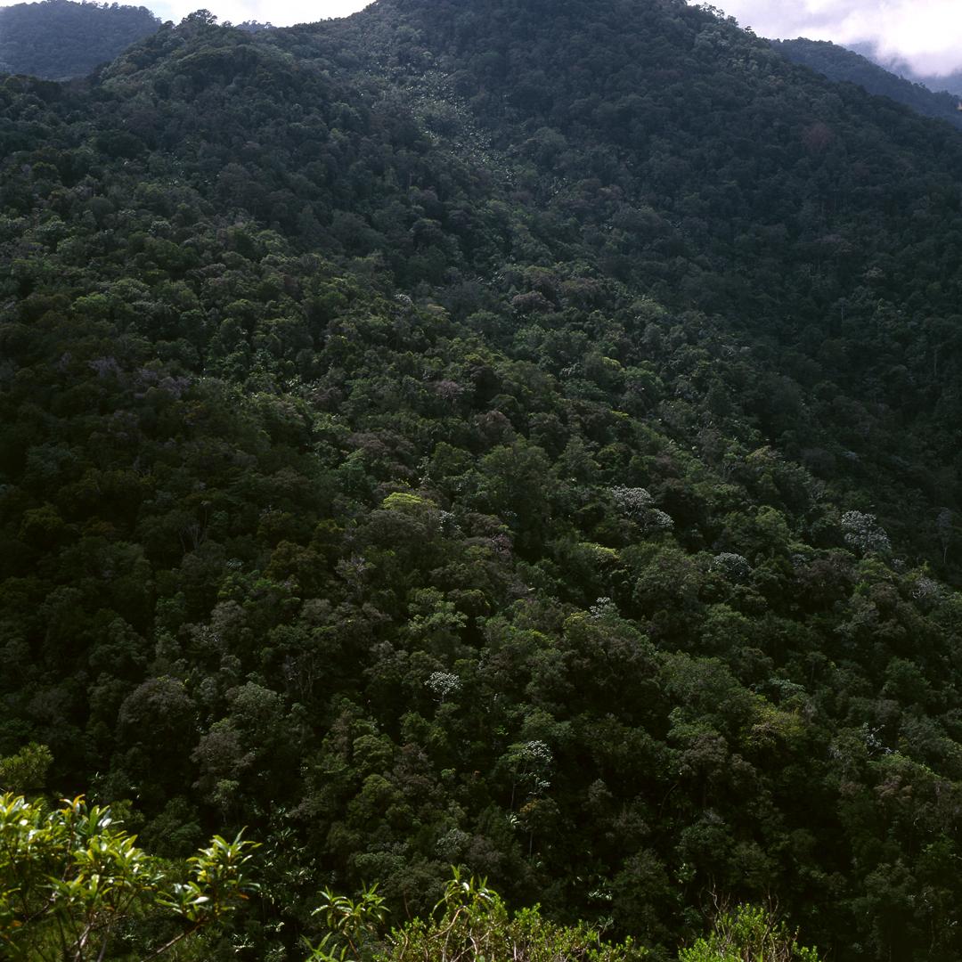 Bosque del Tope