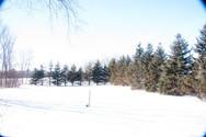 trailside winter.jpg