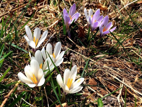 Valle Camonica, la valle dei fiori