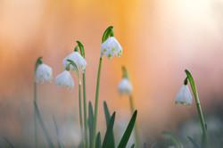 every spring in the Schenkenwald...