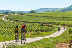 Vélos_vignoble_-Photo_Alain_Doire_Bourgo