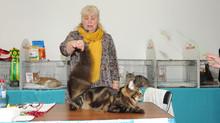 """Выставка кошек """"Фрея"""" 01.05.2015"""