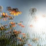 Surely Barbarous-flowers.jpg