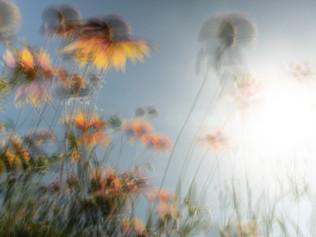 Surely Barbarous-flowers