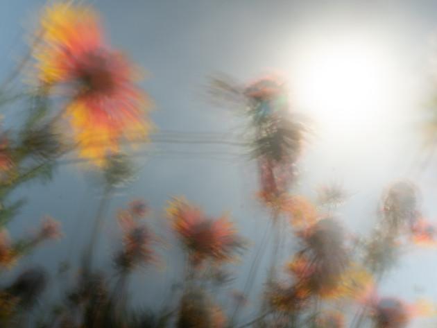 Fantastically Fierce-flowers