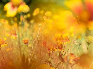Impressively Savage-flowers