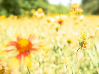 Terribly Untamed-flowers.jpg