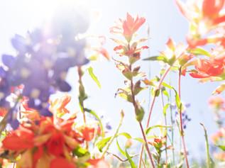 Positively Ferocious-flowers