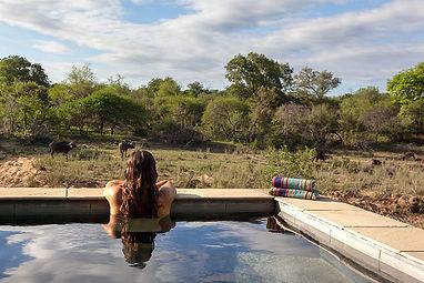 Guest in pool watchig buffalo