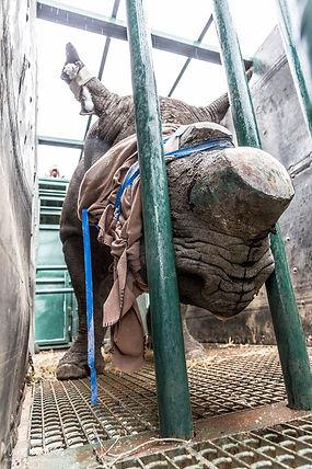 Khaya Ndlovu_Rhino Revolution Mike Kendrick
