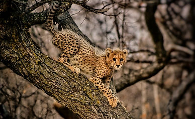 Safarism - Sales, Marketing and Reservations for the African Safari Lodge industry