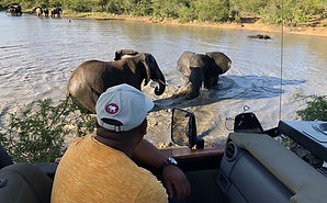 Guest watching elephants swimming