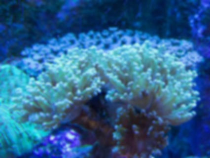 coral background image