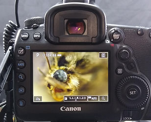 Macro Photography with Canon Camera