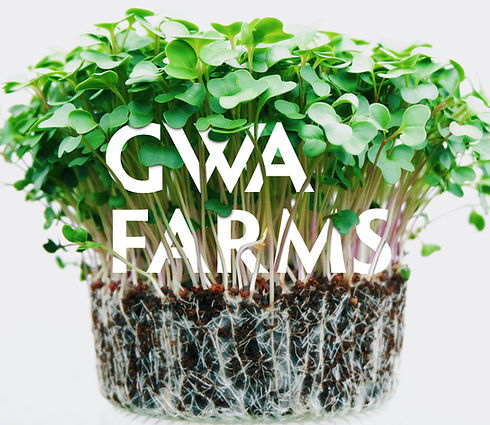 GWA in Shoots.jpg