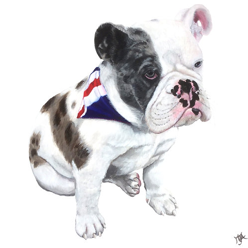 Monty Great British Bulldog
