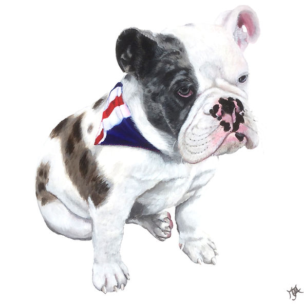 British Bulldog, Pop Art, Original artwork,  Artist Art by Mandy UK ©, Artist Mandy-Jayne Ahlfors ©