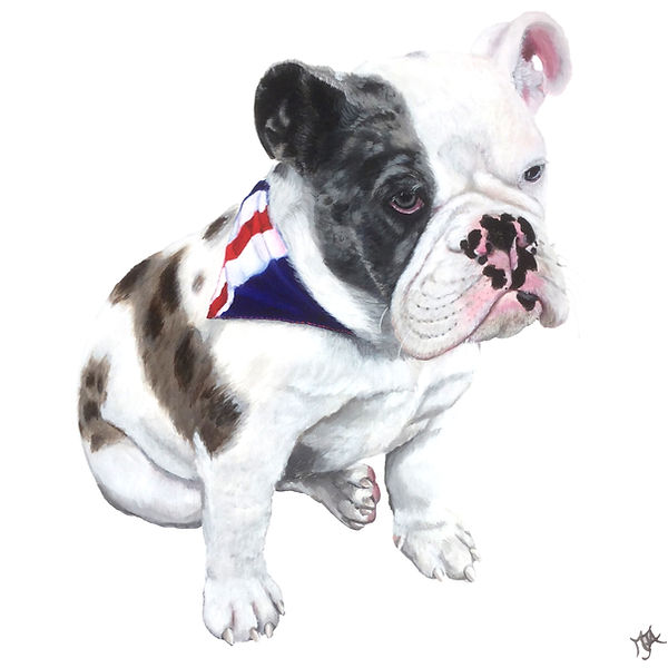 British Bulldog, Monty Pet portrait, Pet portraits by Derbyshire artist Art by Mandy-Jayne Ahlfors ©, www.artbymandy.com