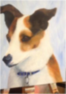 Jack Russell Pet portrait, Pet portraits by Derbyshire artist Art by Mandy-Jayne Ahlfors ©, www.artbymandy.com